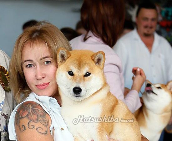 Сука сиба ину Суми с хендлером | Female Shiba inu Sumi with handler